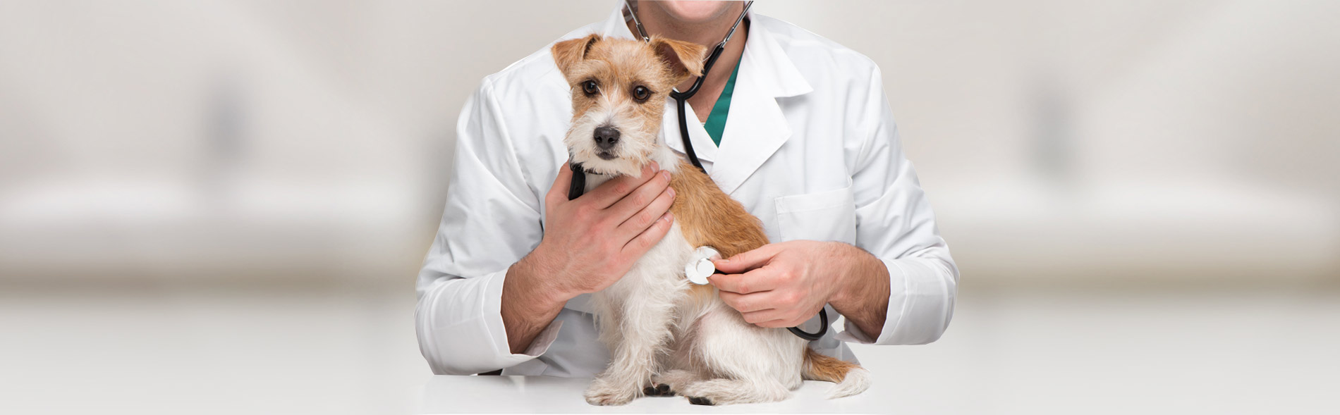 Veterinary Services Offered At Our Pleasant Valley Veterinary Clinic